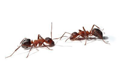 How to Get Rid of Ants - Bay Area Consumers' Checkbook