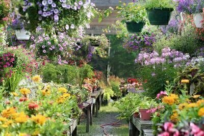 Where to Shop for Plants image