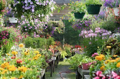 Which Plants To Buy? How To Plant Them? Where To Plant Them? How To Nurture  Them? The Best Run Garden Centers Have ...
