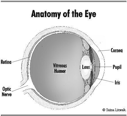 Figure 1—Anatomy of the Eye