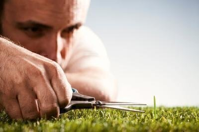 What Do Lawn Care Services Do? image