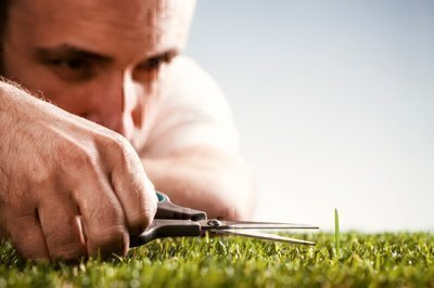 What Do Lawn Care Services Do?