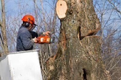How to Choose a Tree Service image