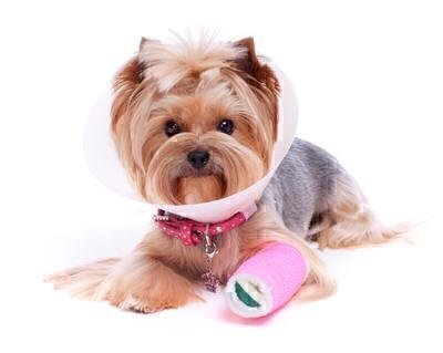 Is Pet Insurance Worth It? image