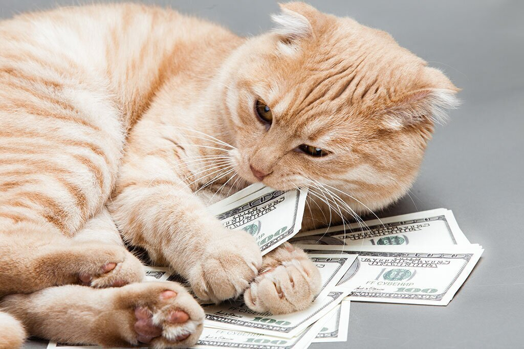 The Hustle Many Pet Insurance Premiums Skyrocket As Pets Get Old