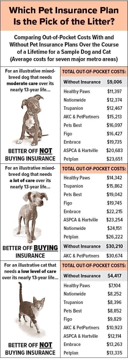 Is Pet Insurance A Smart Purchase National