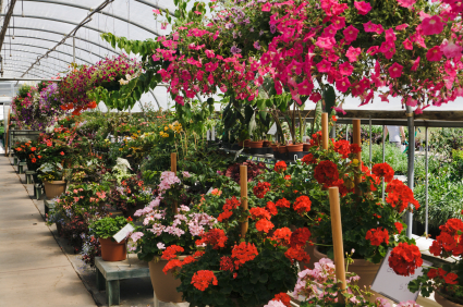 Indianapolis Greenhouse Gardening Center Plant Nursery