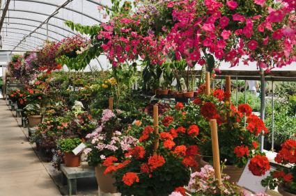 birds english garden and nursery